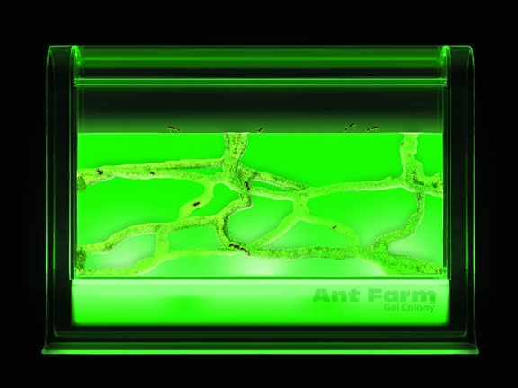 Illuminated Ant Farm Gel Colony by Uncle Milton